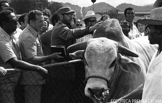 Cuban leader Fidel Castro, third from left, caresses a zebu during a visit to a cattle ranch in Jamaica, Oct. 19, 1977.